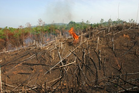 Cameroon slash and burn technique to clear land