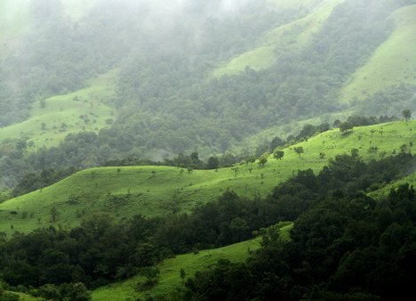 Forests on the edge of the Shola Grasslands, West Bengal.