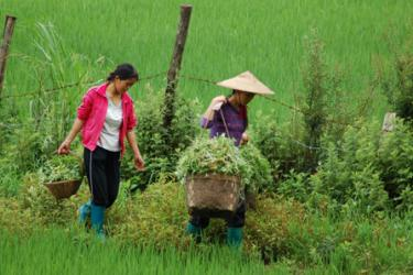 Women farmers carrying harvested vegetables