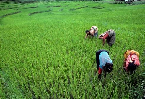 Nepal women farmers