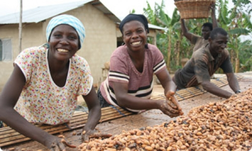 Women of Ghana working to produce chocolate from cocoa pods