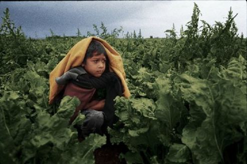 Immigrant child farm worker in the U.S.