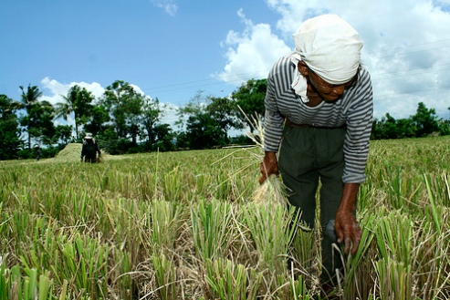 Elderly woman farmer Philippines
