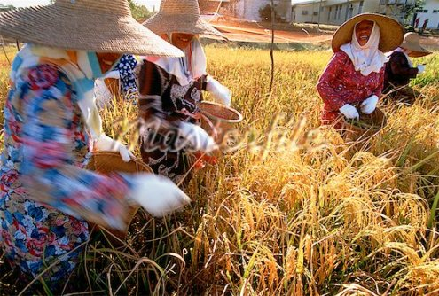 Women farmers in State of Brunei Darussalam, Malaysia