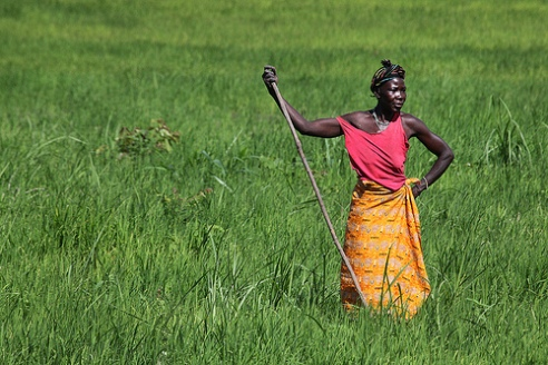 Sierra Leonean woman stands in rice field