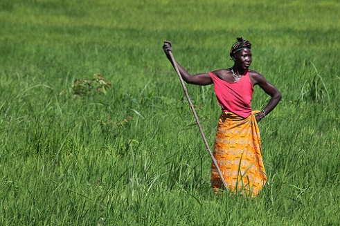 Sierra Leonean woman stands in rice field