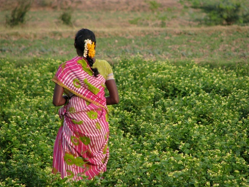 Microfinance project in India