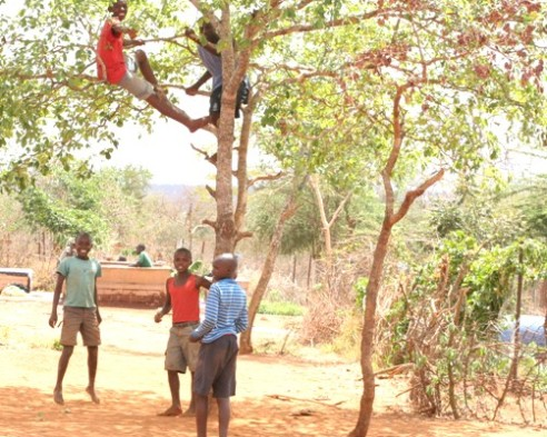 Eastern Kenya boys in tree