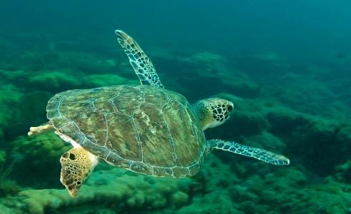 Sea turtle image