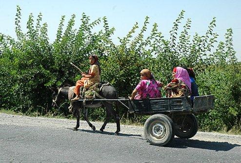 Child farm workers in Tajikistan