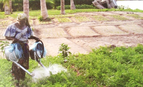 Woman farmer Ghana Volta River Basin