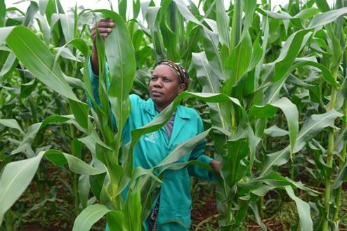woman corn farmer Kenya