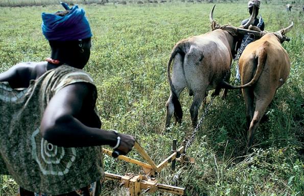 Woman farmer Mali, Africa