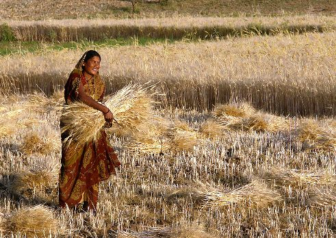 Woman farmer in Madhya Pradesh region of India