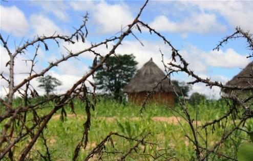 Land and homestead Masingo province Zimbabwe