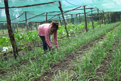 Woman working in a garden under a screen.