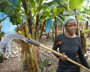 Woman banana farmer