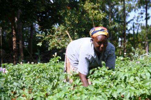 Woman farmer Kenya