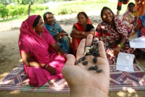 West Bengal, India women farmers show their flood resistant seeds.