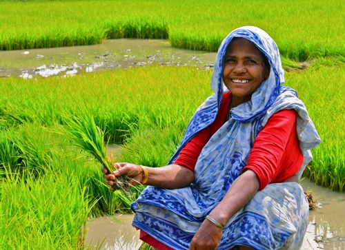 Woman agricultural worker in rural India smiles as she shows how proud she is of her food crop.